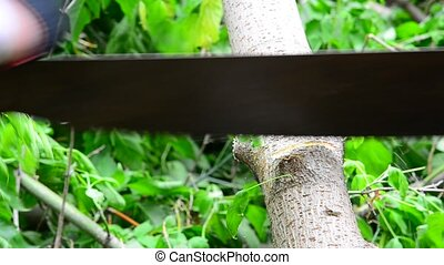 People saw the tree with hand saw. - People saw the tree...