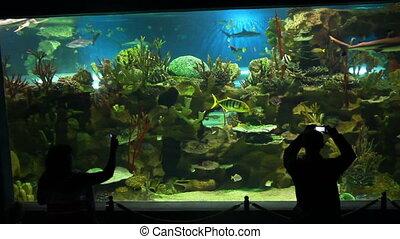 people shooting in oceanarium