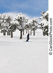 People skiing on a forest slope. White mountain landscape. Winter