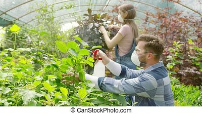 People spraying fertilizer on flowers - Male and female...