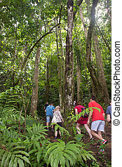 People trekking in the rainforest of Martinique