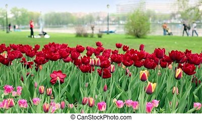 People walk near pond in city, focus is on flowerbed at foreground