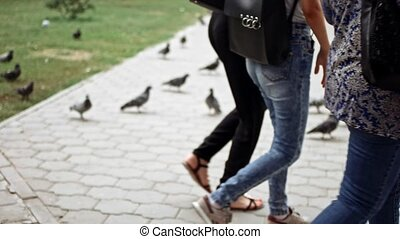 People walking in front of pigeons on pavement