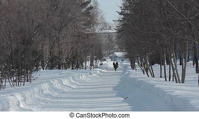 people walking in the beautiful winter park