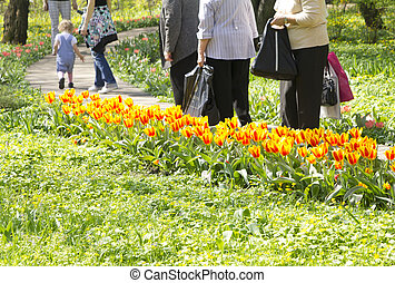 people walking on the footpath in the lush green garden