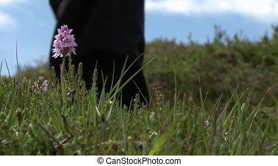 People Walking Past Wildflowers - Steady, low angle, medium...