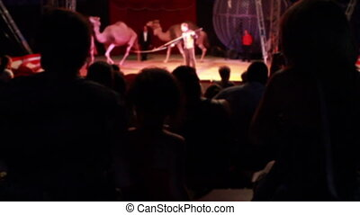 people watching a circus performance of camels and zebra