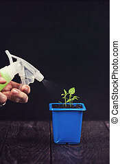 Pepper growing in a pot