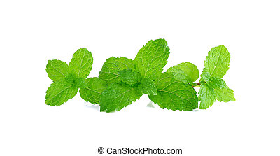 Pepper mint isolated on the white background