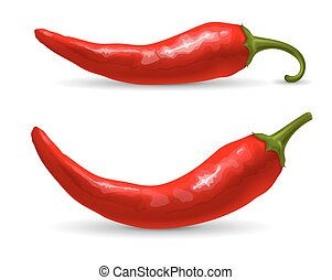 Red hot chili pepper, fresh ingredient for tasty spicy food. Vector illustration. Isolated on white background.