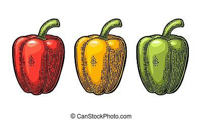 pepper., sino, doce, ilustração, vetorial, vindima, gravado