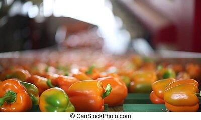 pepper transport - paprika transport