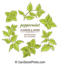 peppermint branches vector set on white background