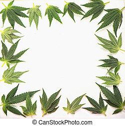 pequeño, cannabis, hojas, formación, un, marco, aislado,...
