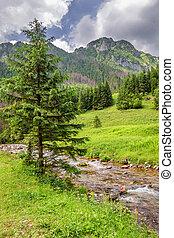 pequeño, corriente, en, koscieliska, valle, tatra, montañas
