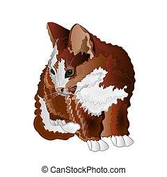 pequeño, gatito, color, sentado