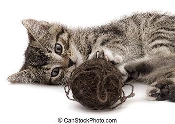 pequeño, gato