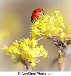 pequeño, mariquita, en, un, flor amarilla, en, primavera