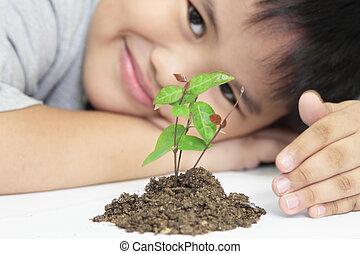 pequeño, planta, concepto, crecimiento