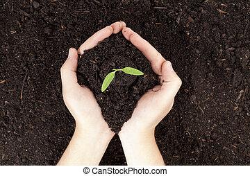 pequeño, planta, llevar a cabo la mano