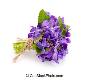 pequeño, ramo, pradera, violets.