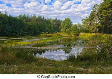 pequeño, seco, lago, en, el, bosque, caliente, verano