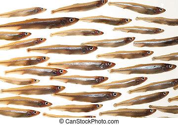 pequeño, (smelts), pez, 7, arreglo
