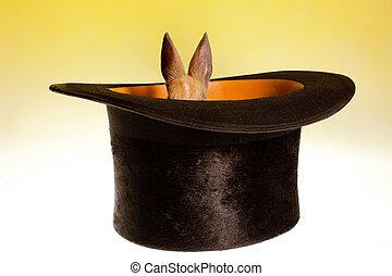 pequeño, sombrero, magia, conejo