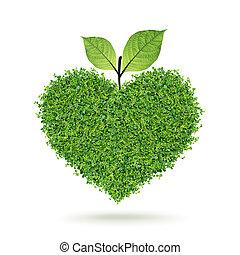 pequeño, verde, plantas, corazón, y, hoja