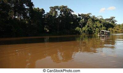 Peque Peque At Amazon - Shipping At Amazon River