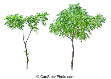 pequeno, árvores verdes, isolado