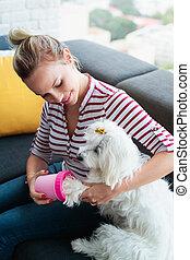 pequeno, animal estimação, cão, limpeza, proprietário, lar, patas