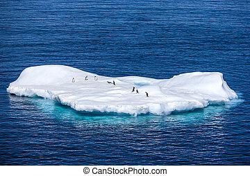 pequeno, antártica, pingüins, iceberg