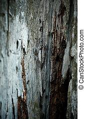 pequeno, antigas, dof., pesadamente, raso, formigas árvore, ladrar, textured, marchar