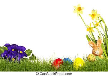 pequeno, bunny easter, com, ovos páscoa, roxo, narciso, e, primula, branco, fundo
