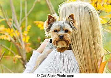 pequeno, cão, ombro