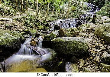 pequeno, cachoeira, floresta