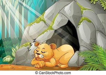 pequeno, caverna, filhote, dormir