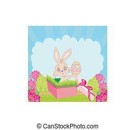 pequeno, coelho, em, caixa presente, páscoa, surpresa, presente