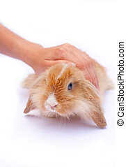 pequeno, coelhos, mãos