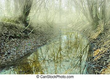 pequeno, decíduo, riacho, floresta