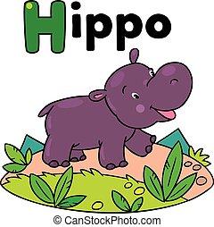 pequeno, engraçado, hipopótamo, para, abc., alfabeto, h