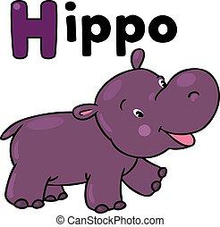 pequeno, engraçado, hipopótamo, para, abc.