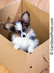 pequeno, filhote cachorro, dentro, um, caixa papelão