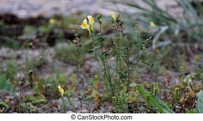 pequeno, flor, vento, amarela, balançando