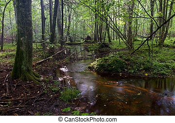 pequeno, floresta, fluxo, fluir
