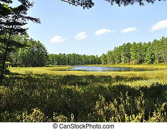 pequeno, floresta, lago