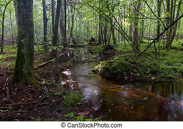 pequeno, fluxo, fluir, em, floresta