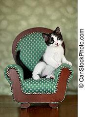 pequeno, gatinho, cadeira, sentando