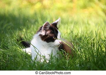 pequeno, gatinho, sentando, em, a, capim